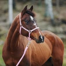 HORZE oglavka za ponija ali žrebička SCOUT - roza